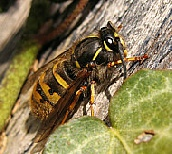 Bird Bee and Wasp Nest Removal